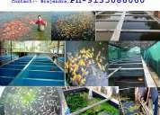 Fish farming consultancy