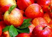 Pomegranate exporter & suppliers in ahmedabad, gujarat, india