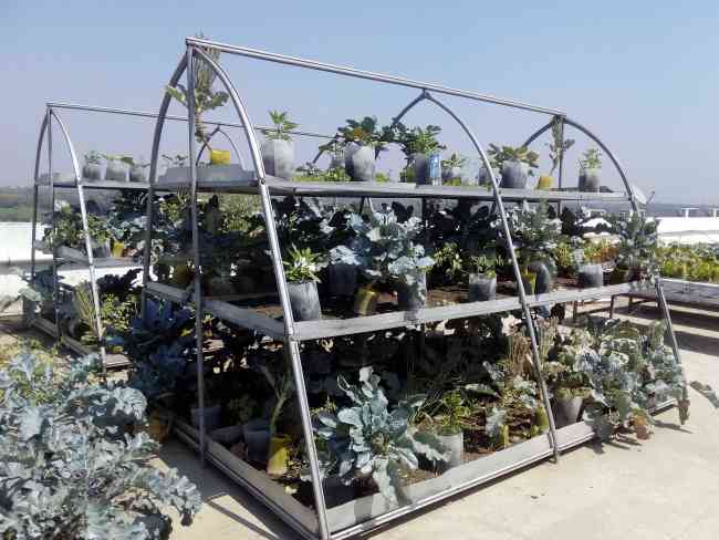 XeFarm Rooftop Organic Farming