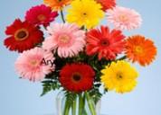 Aryan florist in delhi