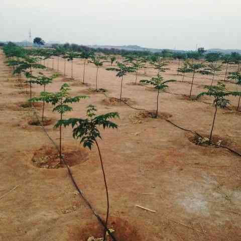 Farmland for sale near Hyderabad with Malabar