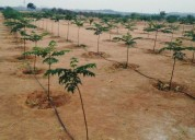 Farmland for sale near hyderabad with malabar