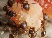 Professional pest control services in gachibowli
