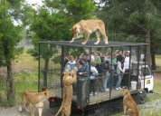 Corbett tour packages 8826586503 national park