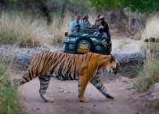 Golden triangle tour with ranthambore tiger safari
