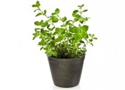 Buy Gift Plants Online in India at Green Decor