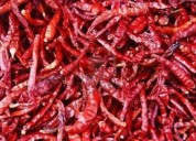 Dry red chilli in india - alram exports