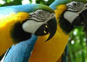 Exotic tamed birds pet shop| macaws,exotic birds