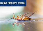 Best pest control in gurgaon