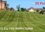 Zx pest control in noida call us +91-9899176888
