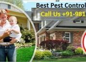 Termite treatment dwarka dial +91-9811381458