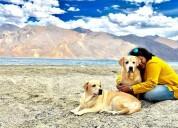 Best pet care gurgaon, delhi, noida - happy pettin