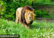 Sasan gir national park - gujarat package