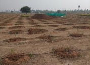 Vasavi sandal county offering plantation plots for