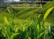 Tea estate available for sale at north bengal
