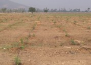 Vasavi sandal county mega sandalwood plantation in