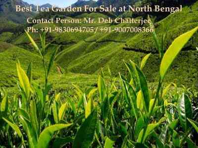 Tea Estate Is About To Sold At North Bengal