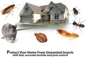 100% secure | pest control gurgaon | +91-98103537