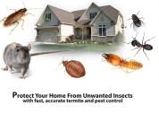 pest control in noida, dial +91-9810353723