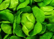 Amazing health benefits of chlorophyll
