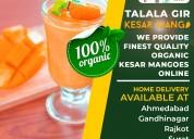Talala gir organic kesar mango | lion mango