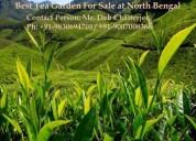 Top grade tea garden available for sale at dooars