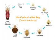 pest control services in noida