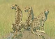 Agama tours and safaris