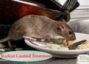 Book effective rodent control treatment
