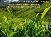 Great tea estate for sale at north bengal
