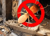 Termite control treatment in chandigarh and mohali
