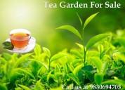 Sale tea garden in profitable price at darjeeling