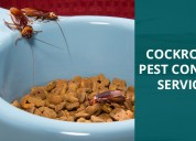 Highly effective service on cockroach control