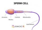 Infertility treatment in hyderabad