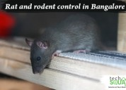 Complete rodent control in bangalore
