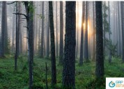 Forest consultant in haryana -  grp estates