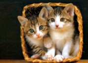 Cats for sale in chandigarh | kitten for sale | my