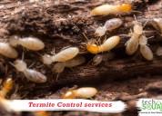 Termite control in bangalore with techsquadteam
