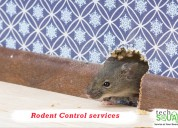Trustworthy rodent control services in bangalore