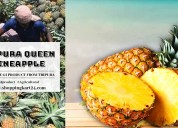Tipura queen pineapple gi product
