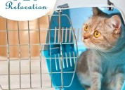 Pet relocation in india