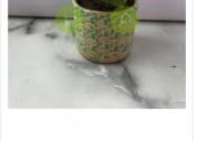Indoor plant online