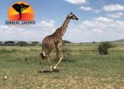 African safari tours