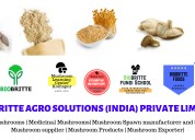 Mushroom food products