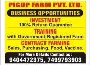 Pig farming & services