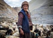 Local lifestyle in leh ladakh
