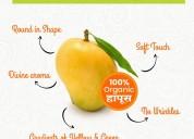 Organic mango buy online