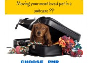 Safe,comfortable and reliable pet shifting servic