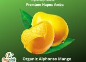 Best online organic alphonso mango|premium quality