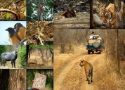 Same day ranthambore tour | one day ranthambore to
